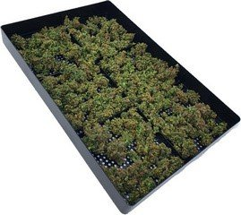 tray for clean cannabis drying